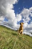 älsklings- djur, hundkapplöpning Royaltyfria Bilder