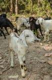 Älsklings- djur i skog Royaltyfri Foto