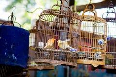 Älsklings- fågelbur för kines Royaltyfri Foto