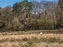 Älsklings- Gloucester gammal fläck i skogsmark Arkivfoto