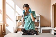 Älsklings- hälsa Stående av en kvinnlig ung veterinär i arbetslikformign som rymmer en phonendoscope och ser den svarta katten royaltyfri fotografi