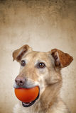 Älsklings- hund Fotografering för Bildbyråer