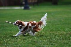 Älsklings- hund Arkivfoton