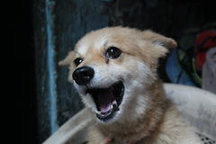 Älsklings- hund Arkivfoto