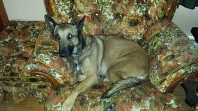 Älsklings- hund för familj som kopplar av på stol Royaltyfri Bild