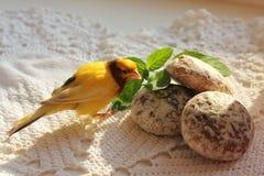 Älsklings- kanariefågel royaltyfri bild