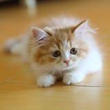 Älsklings- pott för katt arkivbilder
