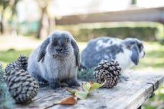 Älsklings- sörjer gå för två gulliga kaniner på en trätabell med outdoo Royaltyfria Foton
