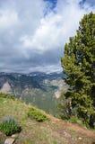 Älskvärd alpin sikt av träd och lupine vildblommor längs det Beartooth passerandet arkivfoton