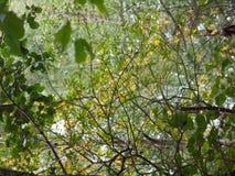Älskvärd bakgrund av filialer och sidor gör grön och gulnar Royaltyfri Foto