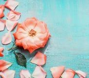 Älskvärd blom- bakgrund med blommor och kronblad på turkosblåttbakgrund royaltyfri foto