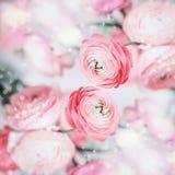 Älskvärd blom- bakgrund med nätta rosa gränsblommor och bokeh Royaltyfri Fotografi