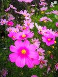 älskvärd blomma Arkivfoto
