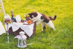 Älskvärd bröllopdekor med en katt Fotografering för Bildbyråer