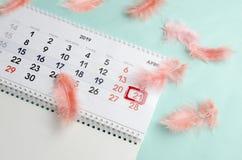 Älskvärd enkel sammansättning av kalender- och korallfjädrar på blå yttersida arkivfoto