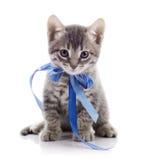 Älskvärd grå kattunge med ett band Fotografering för Bildbyråer