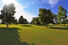 Älskvärd grön gräs- lawn på solnedgången royaltyfri bild