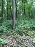 Älskvärd grönska Arkivfoto