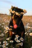 älskvärd hund royaltyfri foto