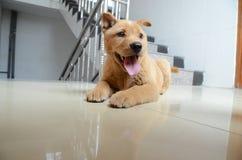 älskvärd hund Royaltyfria Foton