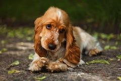 älskvärd hund Arkivfoto