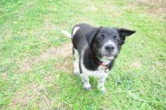 älskvärd hund Royaltyfri Fotografi