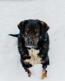 Älskvärd hund som poserar i snön arkivbilder