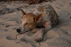 Älskvärd hundkapplöpning ligga på varm sand, snälla vänner av en hund arkivbilder
