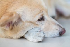 Älskvärd hundsinnesrörelse Royaltyfri Fotografi