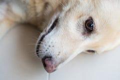 Älskvärd hundsinnesrörelse Arkivfoto