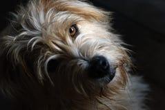 Älskvärd hundstirrande på kameran, under ljus och skugga arkivfoto