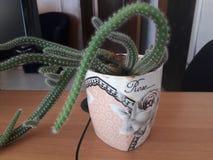 Älskvärd kaktusgarnering i hemmet arkivfoton