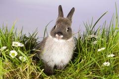 älskvärd kanin Arkivfoton