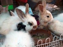 älskvärd kanin Arkivbilder