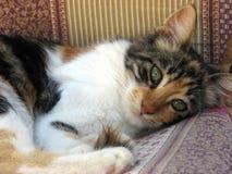 älskvärd katt arkivfoto