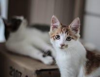 älskvärd katt Royaltyfria Bilder