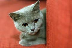 älskvärd katt Arkivbilder