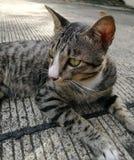 älskvärd katt Arkivbild