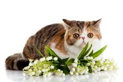 Älskvärd katt med blommor, bollar, målarfärger som isoleras på den vita backgrouen Royaltyfria Foton