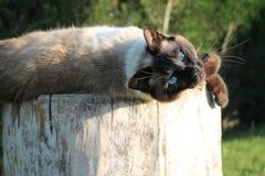 Älskvärd katt på ett träd royaltyfri fotografi