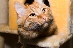 Älskvärd katt som ligger i katthuset Royaltyfri Foto