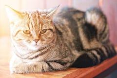 Älskvärd katt som ligger ner sett från sidan som ser kameran, mjuk fokus Arkivfoton