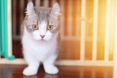 Älskvärd katt som ser kameran, mjuk fokus Royaltyfria Bilder