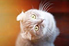 Älskvärd katt som ser sitta upp på träbakgrunden Royaltyfria Foton
