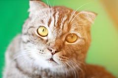 Älskvärd katt som ser sitta upp på träbakgrunden Arkivbild