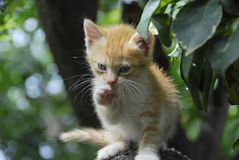 älskvärd kattunge Arkivbilder