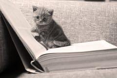 älskvärd kattunge Royaltyfri Foto