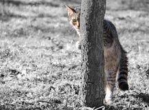 älskvärd kattunge arkivfoto