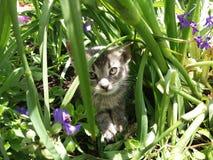 älskvärd kattunge Royaltyfri Fotografi