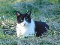 Älskvärd lös katt som vilar i gräset royaltyfria foton
